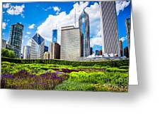Picture Of Lurie Garden Flowers With Chicago Skyline Greeting Card