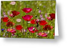 Picture Perfect Poppies Greeting Card
