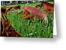 Pieces In The Lawn Greeting Card