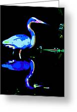 Pied Heron Greeting Card