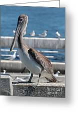 Pier Brown Pelican Greeting Card