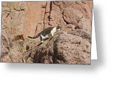 Pierre The Mountain Climber Greeting Card