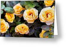 Pierre's Peach Roses Greeting Card