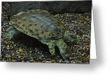Pig-nosed Turtle Greeting Card