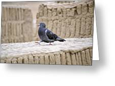 Pigeon At Huaca Pucllana In Lima Peru Greeting Card