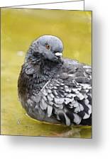 Pigeon Bath Greeting Card