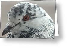 Pigeon Close-up Greeting Card