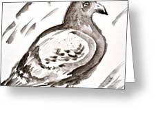Pigeon I Sumi-e Style Greeting Card