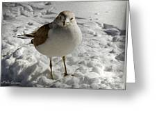 Pigeon In The Snow Greeting Card