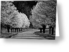 Pigeon Mountain Dogwoods In Black And White Greeting Card