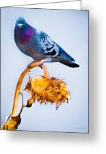 Pigeon On Sunflower Greeting Card