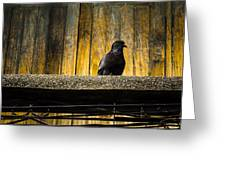 Pigeon On The Balcony Greeting Card