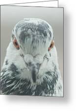 Pigeon Portrait En Face Greeting Card