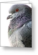 Pigeon Portrait Greeting Card
