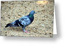 Pigeon Toed Greeting Card
