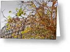 Pigeon Tree At The Taj Greeting Card