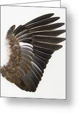 Pigeon Wing Showing Overlapping Feathers Greeting Card