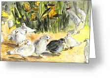 Pigeons In Benidorm Greeting Card