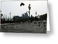 Pigeons Of San Marco  Greeting Card