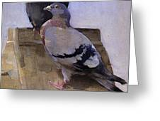 Pigeons On The Roof Greeting Card