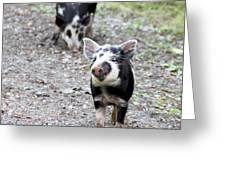 Piglets On The Loose Greeting Card