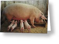 Momma Pig And Piglets Greeting Card by Terry DeLuco