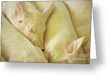 Pigs Sleeping Greeting Card