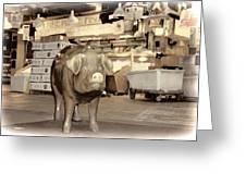 Pikes Peak Market Pig Greeting Card