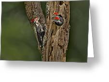 Pilated Woodpecker Family Greeting Card by Susan Candelario