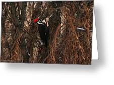 Pileated In Winter Greeting Card