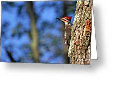 Pileated Series #14 Greeting Card