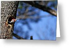 Pileated Series #3 Greeting Card
