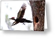 Pileated Series #7 Greeting Card