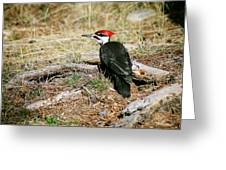 Pileated Woodpecker Forest Floor Greeting Card