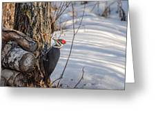Pileated Woodpecker Winter Greeting Card