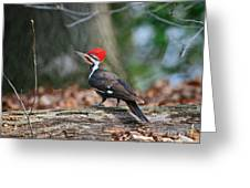 Pileated Woodpecker On Log Greeting Card