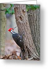 Pileated Woodpecker On Tree Greeting Card