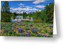 Pilgrim Creek Wildflowers Greeting Card