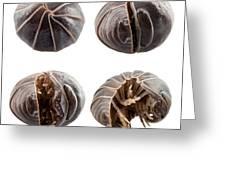 Pill-bug Armadillidium Vulgare Greeting Card