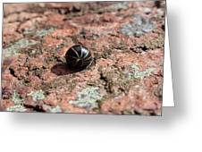 Pill Millipede Greeting Card