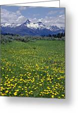 1a9210-pilot Peak And Wildflowers Greeting Card