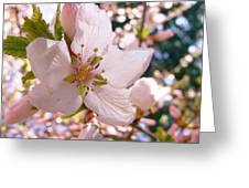 Pin Cherry Blooms Greeting Card