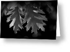 Pin Oak Leaves Greeting Card