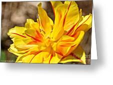 Pin Striped Tulip Greeting Card