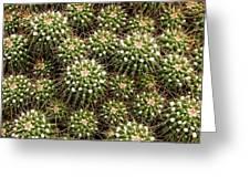 Pincushion Cactus Greeting Card