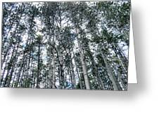 Pine Abstract Greeting Card