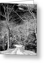 Pine Barrens Path Greeting Card by John Rizzuto