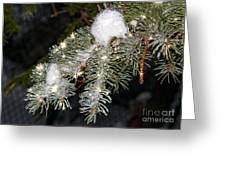 Pine Branch With Ice And Stars Greeting Card