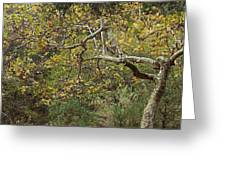 Pine Canyon Silverado Greeting Card