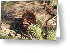 Pine Cone And Small Branch Greeting Card